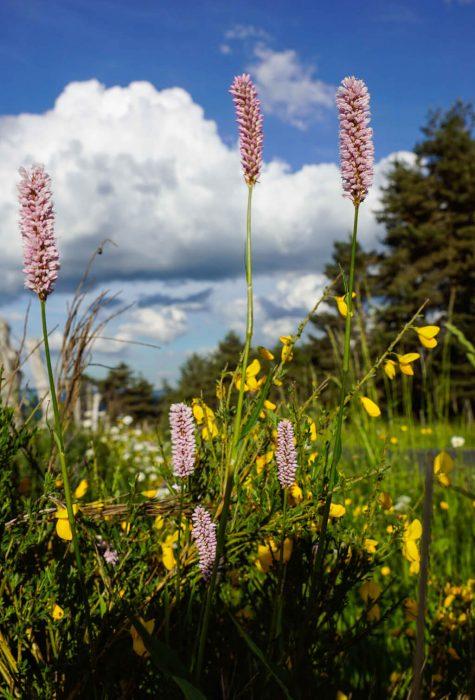 Flore de Margeride ©Jean-Sébastien Caron